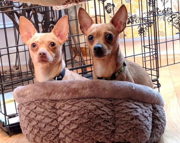 Churro and Nacho