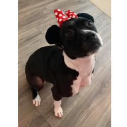 Sadie – Adopted